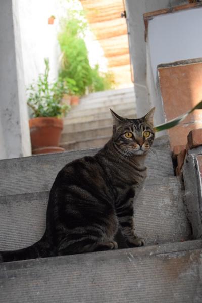caza feliz: día veintisiete — los vecinos
